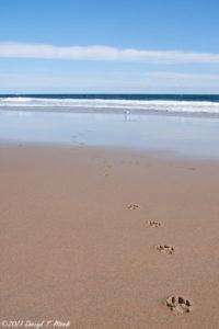Jersey Shore Photos - Sea Girt