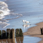 Jersey Shore Photos - Bayshore Waterfront Park (2)